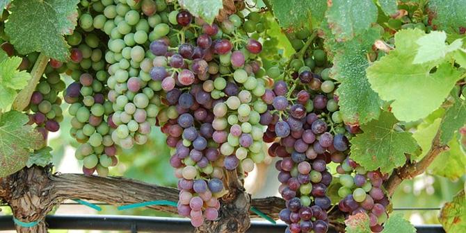 wine_670