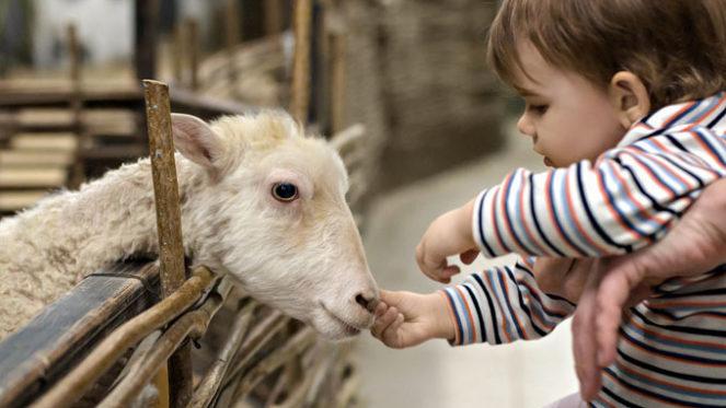 child farm animal
