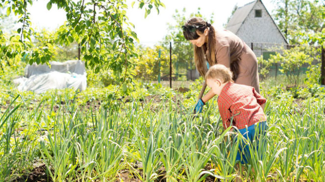 child parent gardening